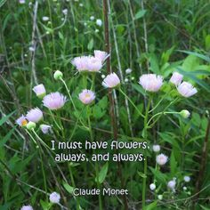 """""""I must have flowers, always, and always."""" ―Claude Monet  Photo: Wildflowers growing in the forest, Brown County, Indiana. 2015."""