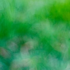 Defocused Nature Abstract