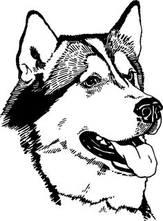 Sled dog coloring pages stock photo alaskan sled dogs for Husky puppy coloring pages