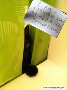 Shame Your Pet | Dog Shaming • Cat Shaming | Shame Your Pet @Claire Lockett this is so Finn!!