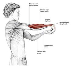 Fingers Down Wrist Stretch – Common Shoulder Stretching Exercises Sport Fitness, Yoga Fitness, Workout Fitness, Shoulder Stretching Exercises, Muscle Stretches, Yoga Pilates, Muscle Anatomy, Sports Massage, Shoulder Workout