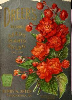 Dreer's garden book : 1904
