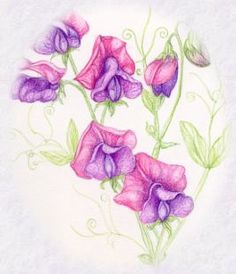 Sweet Pea also April birth flower Sweet Pea Flower Pictures, Sweet Pea Flowers, Sweet Pea Tattoo, Sweet Tattoos, Tattoo Designs For Girls, Flower Tattoo Designs, Flower Tattoos, April Birth Flower, Birth Flowers