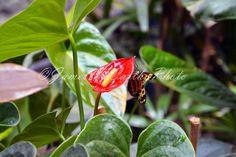 Digital Desktop Wallpaper  Butterfly on Red  by JamesMcCarthyPhoto