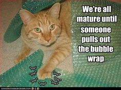 Bubble wrap brings out the kid in us all.