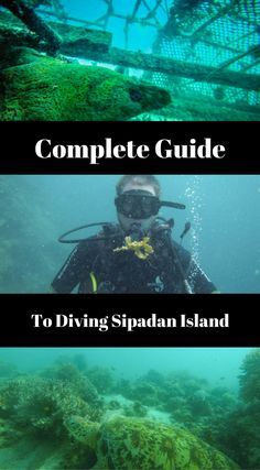 Complete Guide to Diving Sipadan Island. At Sipadan you will see this with every dive, many divers bring home stories of large turtles, bigger then a Volkswagen Beetle, or even stories of large groups of hammer head sharks coming up from the deep blue depths. Click to read the full guide to scuba diving Sipadan at http://www.divergenttravelers.com/complete-guide-diving-sipadan-island/