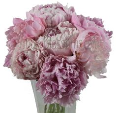 Pink Peony Bulk Wedding Flowers are usually used as focal points for floral arrangements. The rich, pink tone of this variety is truly romantic. Ranunculus Wedding Bouquet, Ranunculus Flowers, Anemone Flower, Pink Peonies, Bridal Bouquets, Peonies For Sale, Flowers For Sale, Bulk Wedding Flowers, Winter Wedding Flowers