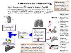Cardiovascular Pharmacology - Renin & Angiotensin System   NCLEX Review: Pharmacology