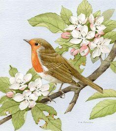 Robin & Apple Blossoms