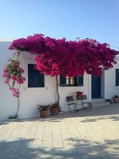 Bougainvillea Trellis, Beautiful Gardens, Beautiful Flowers, Paros Greece, Paros Island, Colorful Garden, Dream Garden, Garden Paths, Garden Projects