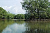 Los humedales de agua salobre son estadios transitorios que pueden dar lugar al manglar.