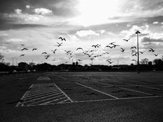 Seagulls take flight black and white