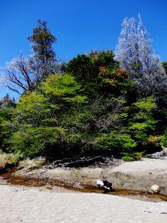 Colours-Bahia-Villa-Tacul-Bariloche Tree