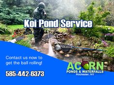 Is it that time of the year where your pond or water feature are in need of some maintenance? Garden Pond, Water Garden, Pond Algae, Pond Cleaning, Outdoor Waterfalls, Pond Maintenance, Rochester New York, Pond Waterfall, Pond Water Features