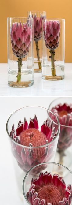 This is EVERYTHING you'll need to know about using Protea flowers in your wedding or other wedding events. it's a gorgeous and easy to work with bloom! wedding event Wedding Flower Power // The Unparalleled Protea Flor Protea, Protea Flower, Church Wedding Flowers, Cheap Wedding Flowers, Diy Flowers, Fall Wedding, Wedding Ceremony, Wedding Table, Boho Wedding