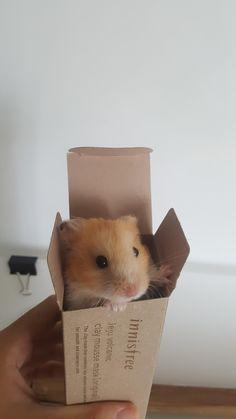 My Syrian hamster Oliver