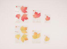 Appree Sticky Leaf Maple.
