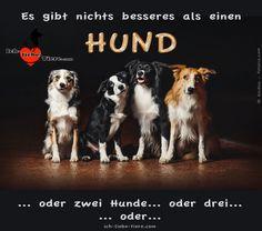 Es gibt nichts besseres als einen HUND! >> http://www.ich-liebe-tiere.com/ <<
