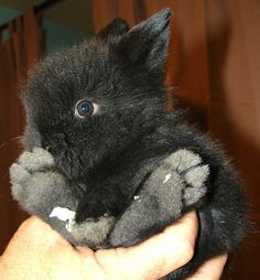 20 of the most adorable and cute baby Bunny Pictures! One Month Old Baby Bunny