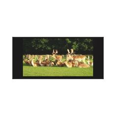 Decorate your walls with Photography canvas prints from Zazzle! Choose from thousands of great wrapped canvas to beautify your home or office. Canvas Art Prints, Wrapped Canvas, Deer, Decor Ideas, Gallery, Photography, Painting, Photograph, Roof Rack