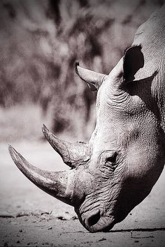 Rhino... one of Africa's jewels ♥