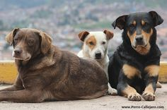 Three musketeers Street Dogs!!!