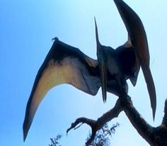 """COVERT SCIENCE-TEXAS PTERANODON(Pt.2)Alex Resendez saw the 'bird' in broad daylight, as it landed in a cow pasture near his McCook, TX home. It had glassy, black eyes w/red markings, but its oddest feature was its """"beak was very transparent. If you just glance, you'll think he ain't got one. I never seen a bird that big. He was brownish & didn't stand like other birds."""" He estimated it stood 4-feet tall, & when it unfurled its wings, they had blue and white stripes. """"Passing…"""