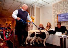 Dogs at the Hotel Monaco / si tan solo tuvieramos un trailer para viajar con los perros!