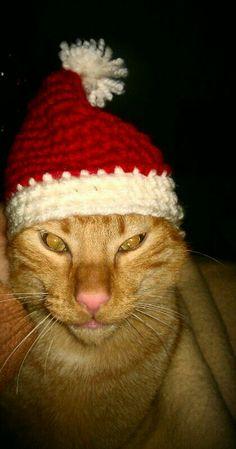 Gorro nuevo para mis peques, hecho con todo mi amor para desearos unas felices fiestas! xD #christmas #diy #madebyme #crochet #navidad #gato #cat #love #fashion