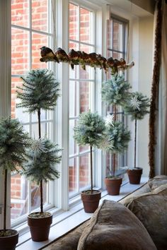 plant pots with evergreen topiaries andcute  birds on a branch
