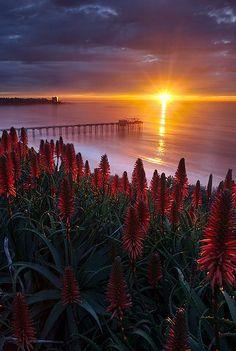 Sunset at Scripps Pier in La Jolla near San Diego, California • photo: Max Vuong on 500px