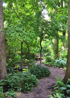 This garden is a shade lover's dream garden with towering trees and paths to intimate spaces.