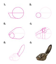 Drawing Animals Tips What You'll Be CreatingHares and rabbits are often confused with each other because of their hopping movement and long ears. To draw them accurately, we need to understand what makes them so. Drawing Skills, Drawing Lessons, Drawing Techniques, Animal Sketches, Animal Drawings, Illustrator Tutorials, Art Tutorials, Rabbit Drawing, Rabbit Sculpture