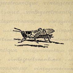 vintage botanical prints grasshopper - Google Search | Skin ...