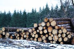 Iced timber! - lumber stacked high deep in the #Wicklow Mountains south of #Dublin #Ireland