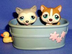 http://www.ebay.com/itm/Littlest-Pet-Shop-Bath-Buddies-Lot-of-2-Husky-Puppy-Dogs-LPS-386-70-BathTub-/290798054703?pt=Pretend_Play_Preschool_US=item43b4ea2d2f
