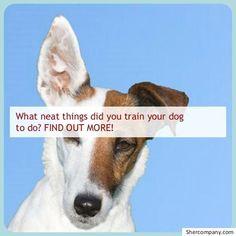 Best Dog Training Books, Dog Training Tips, Potty Training, Dog Minding, Easiest Dogs To Train, Dog Training Techniques, Aggressive Dog, Dog Barking, Dog Owners