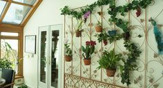 Orchid wall in a sunroom. DIY with a flattened room divider or tri fold screen. Attach hangapot hangers with wire or cable ties.