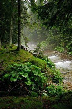 A dark forest...