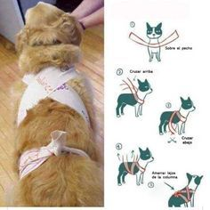 Homemade Thunder Shirt - This Simple Trick Will Help Keep Your Dog Calm During Fireworks Dog Separation Anxiety, Dog Anxiety, Anxiety Tips, Dogs With Anxiety, Anxiety Help, Dog Wrap, Old Dogs, Dog Training, Training Tips