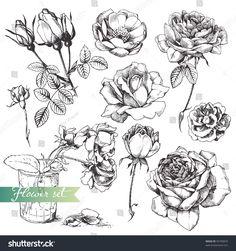 stock-vector-flower-set-highly-detailed-hand-drawn-roses-93709870.jpg (1500×1600)