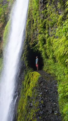 The long yet rewarding hike to Tunnel Falls by Portland, Oregon. Click through to check out these 10 incredible waterfall hikes in Oregon! 10 best waterfall hikes that are a must see for anyone visiting Oregon. Oregon Road Trip, Oregon Travel, Travel Usa, Portland Oregon Hikes, Portland Hiking Trails, Hiking Near Portland Oregon, Oregon Coast Roadtrip, Travel Portland, Salem Oregon