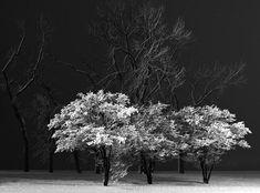 Ansel Adams - Winter Trees