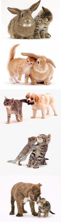 so much cuteness!
