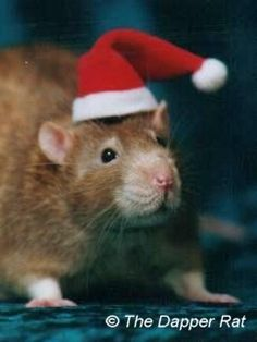 Christmas 2001 by the Dapper Rat