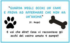 www.cancorso.it cancorso2013, cancorso, cani, cane, concorso, concorsi, contest, ilmessaggero, quotidiano, animali, storie, canstorie, coppie, cancoppie, citazione, citazioni
