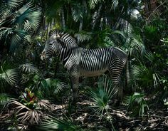 Simen Johan's Untitled #183 from the series Until the Kingdom Comes, 2015