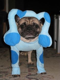 Blue's Clues Costume for Dog (: I love it! A bunch more dog costume ideas on this site!