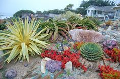 Gardens by Gabriel by FarOutFlora, via Flickr (super jealous/ in love with that yucca bright star!!)