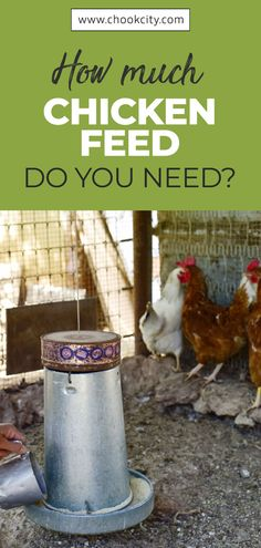 Chicken feed should meet all the nutritional requirements of your flock. If you are confused about what to feed chickens, then this guide will answer all your questions about healthy and complete chicken feed What To Feed Chickens, Raising Backyard Chickens, Keeping Chickens, Chicken Facts, Chicken Life, Chicken Breeds, Chicken Coops, Organic Chicken Feed, Raising Quail